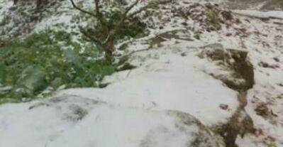 苗栗也下雪! 海拔1250m鹿場部落飄雪